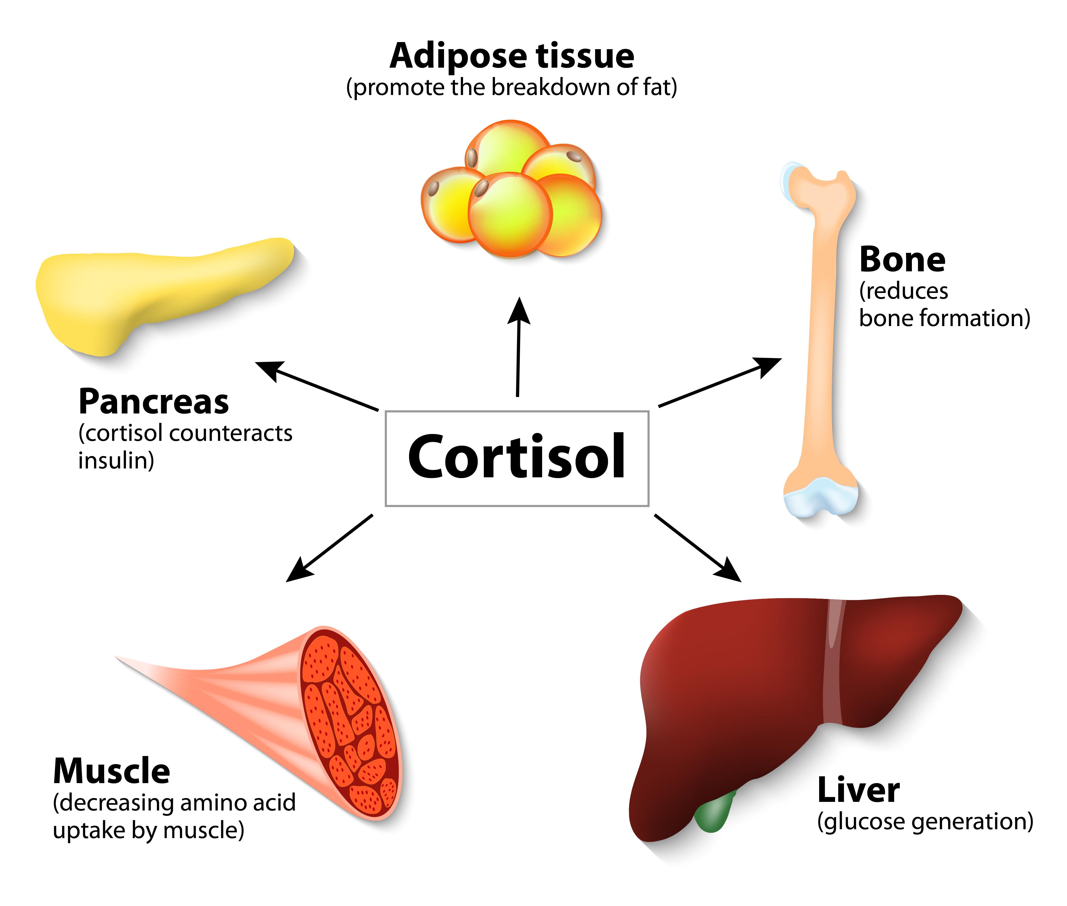 http://dieta.ru/files/Image/ashwagandha-cortisol-control.jpg
